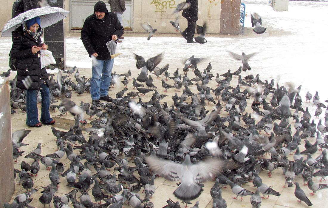 Kış güvercinleri...